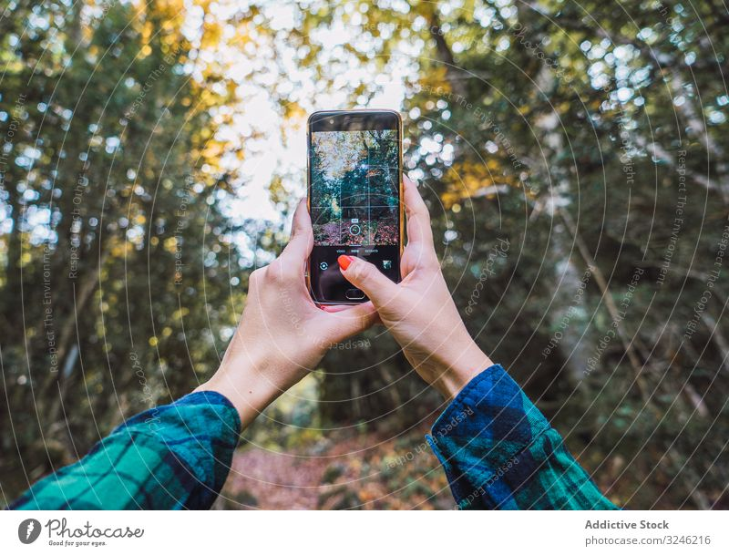 Casual tourist making photo on smartphone of nature taking autumn tree woods using browsing device gadget forest picture camera leaf vacation colorful foliage
