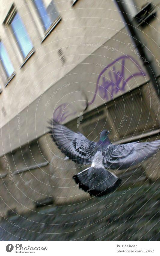 Wall (building) Window Gray Flying Aviation Gloomy Wing Pigeon Plaster Backyard Paving stone Passage