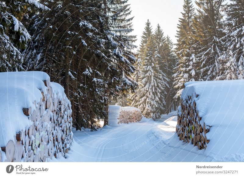 Sky Nature Christmas & Advent Landscape Tree Relaxation Forest Winter Natural Lanes & trails Snow Tourism Trip Ice Beautiful weather Footpath