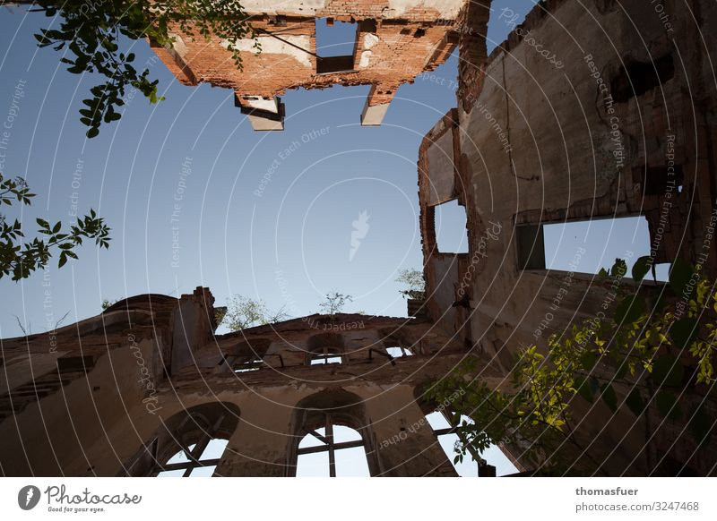 Ruin with sky, frog's eye view Tourism Sightseeing Summer Sky Cloudless sky Beautiful weather Tree Bushes Park Old town House (Residential Structure) Church
