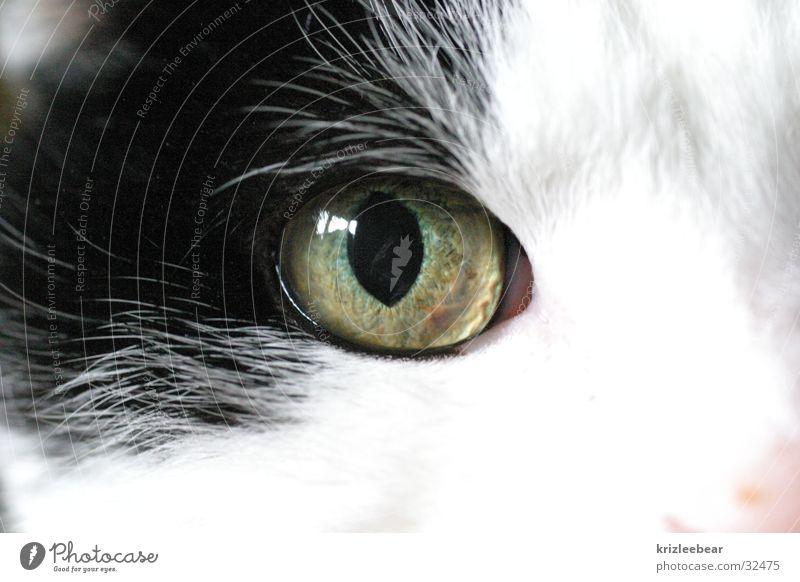 cat's eye 1 Cat Macro (Extreme close-up) Black White Snout Eyes Cat eyes Close-up