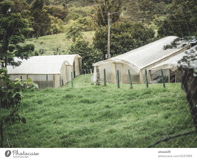 Green house in the field Vegetable House (Residential Structure) Gardening Industry Technology Culture Nature Plant Growth Fresh agricultural agriculture