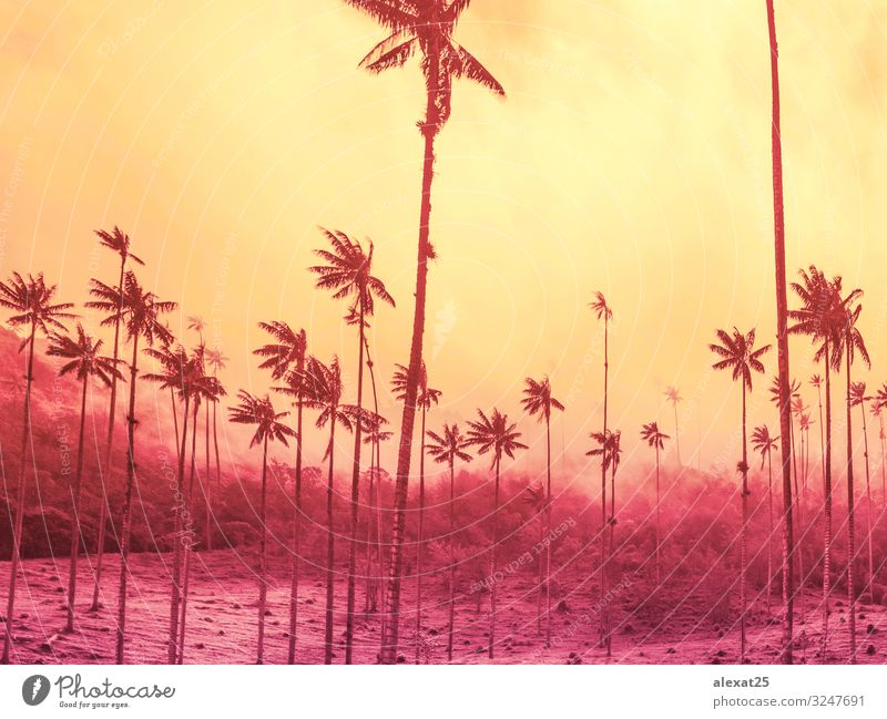 Palm trees background with copy space on yellow and strong pink Exotic Beautiful Vacation & Travel Tourism Summer Sun Beach Ocean Island Nature Landscape Sky