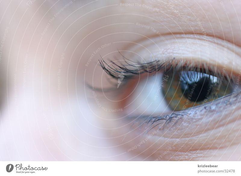 Human being Child Youth (Young adults) Green Eyes Brown Large Eyelash Mascara
