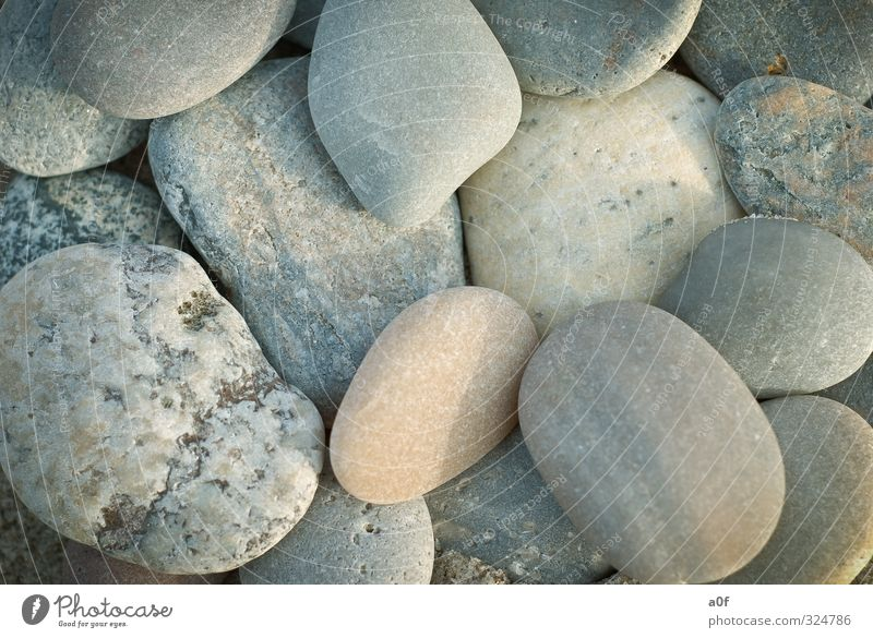 stones Environment Nature Beach North Sea Stone Old Denmark Colour photo Exterior shot Close-up Detail Pattern Structures and shapes Deserted Day Light Shadow