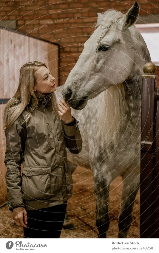 Woman hugging horse with long mane in face in stable woman pet stallion animal care dapple gray head muzzle white nature mammal bridle farm saddle field brown