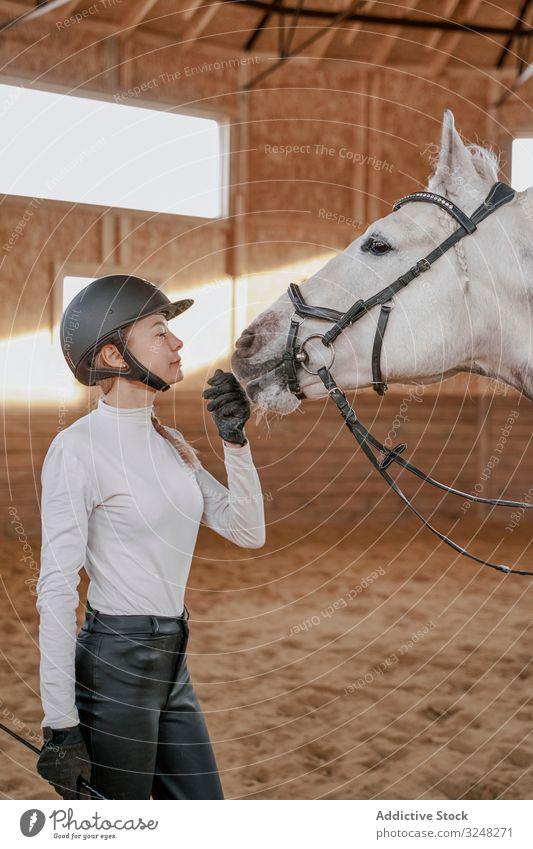 Rider with dapple gray horse in round arena horsewoman stallion pet animal care nature mammal bridle farm horseback equine kind equestrian muzzle purebred