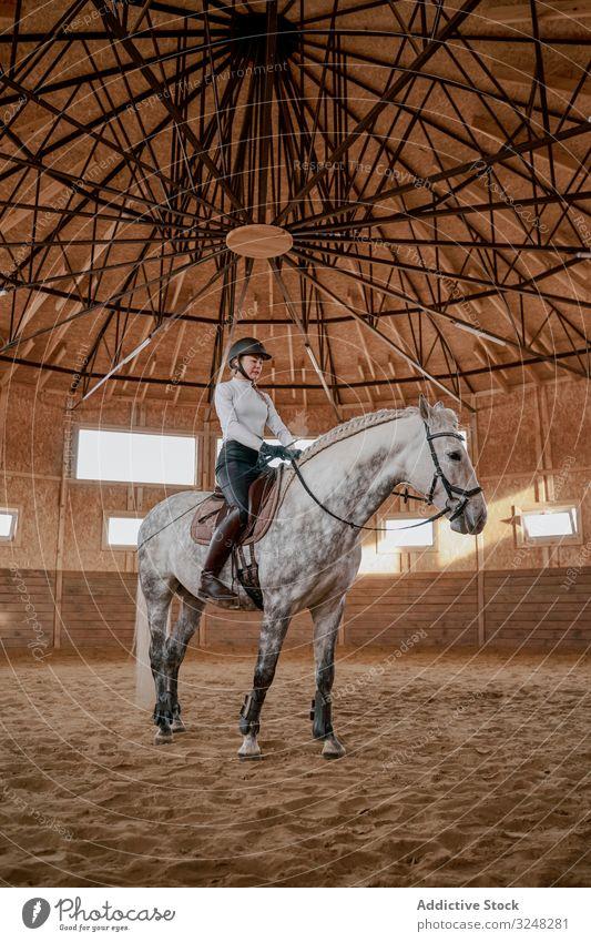 Rider riding dapple gray horse in round arena horsewoman stallion pet animal care nature saddle mammal bridle farm horseback equine kind equestrian muzzle