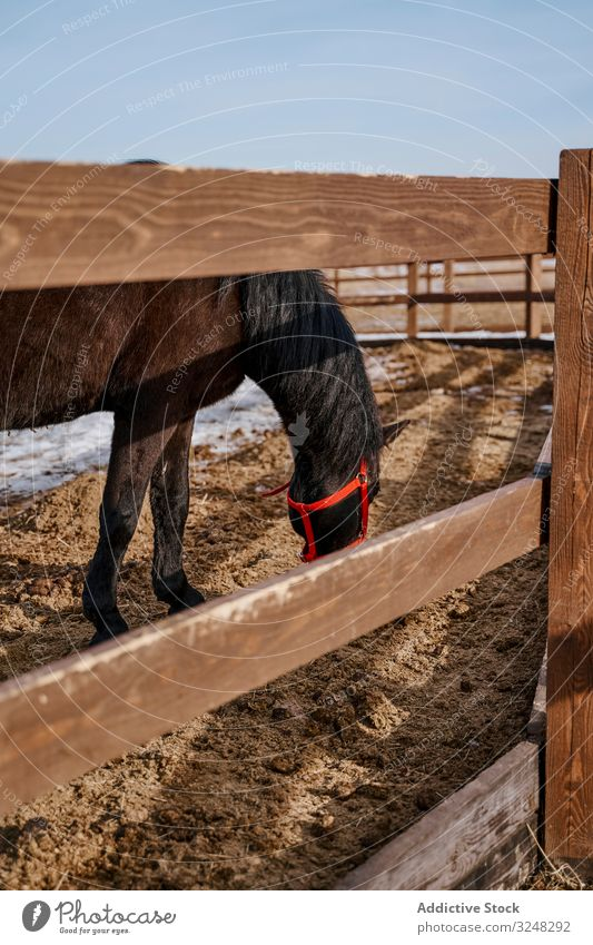 Brown horse in snaffle behind wooden fence pet stallion animal care nature mammal bridle farm saddle horseback pasture field brown countryside hippodrome equine