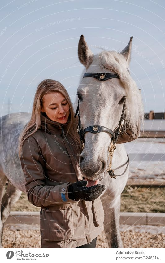 Warm dressed woman with gray horse outside pet stallion animal care nature mammal straw farm saddle horseback pasture stable field affection countryside love