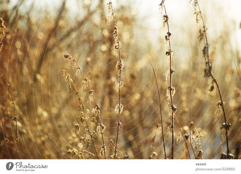 Sunny Grass Nature Colour Plant Winter Yellow Meadow Bright Orange Gold Illuminate Fresh Dry Thin Foliage plant