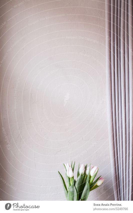 Flower Interior design Wall (building) Pink Living or residing Modern Plaster Tulip Curtain Rendered facade