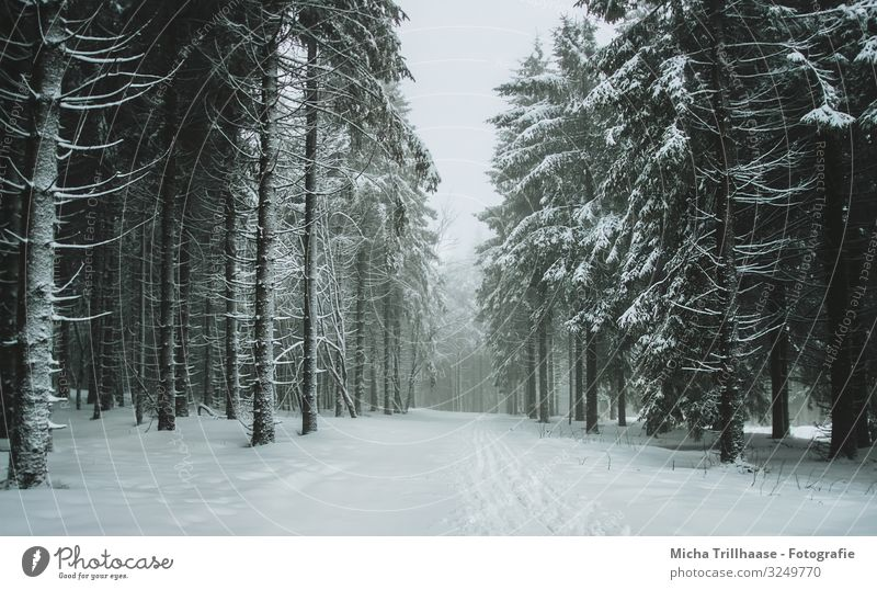 Sky Vacation & Travel Nature Plant Blue Green White Landscape Tree Relaxation Calm Forest Winter Black Cold Natural