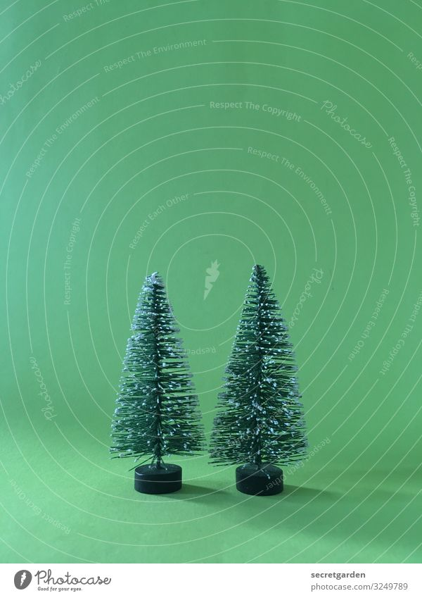 Second Advent. Model-making Winter Christmas & Advent Environment Tree Foliage plant Fir tree Sign Cute Point Thorny Green Contentment Kitsch Minimalistic