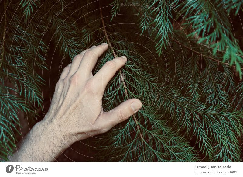 hand touching the green leaves feeling the nature Hand Leaf Green Fingers body part Hold Emotions Touch Nature Fresh Exterior shot Beautiful Fragile