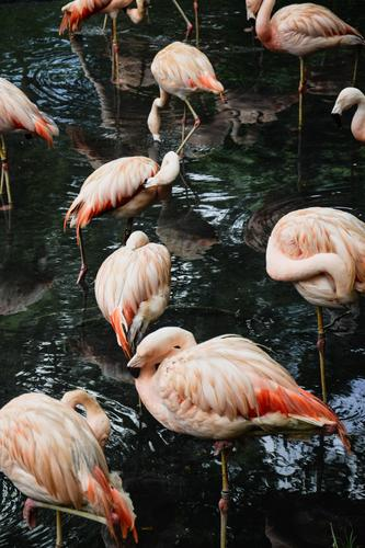 Flamingos Lifestyle Elegant Exotic Joy Vacation & Travel Tourism Trip Adventure Safari Summer Garden Environment Nature Landscape Animal Water Climate Forest