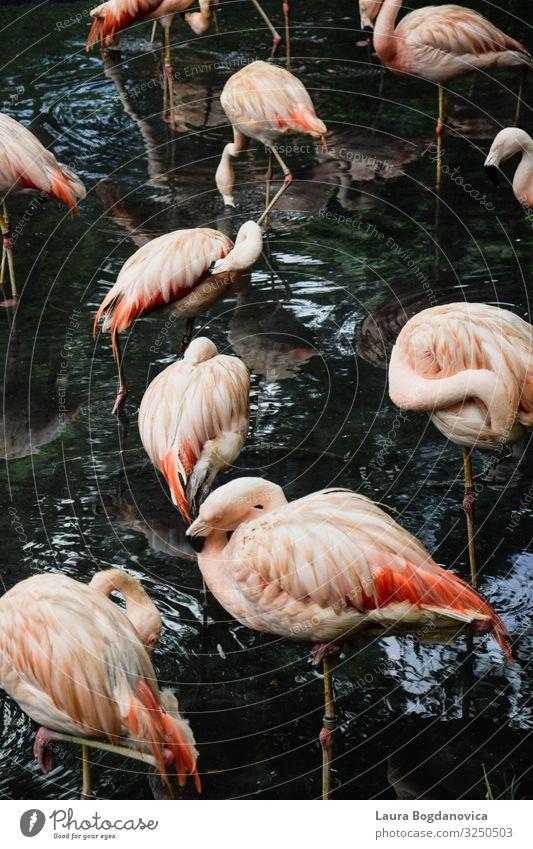 Flamingos Vacation & Travel Nature Summer Green Water Landscape Animal Joy Forest Lifestyle Environment Coast Tourism Garden Pink Trip