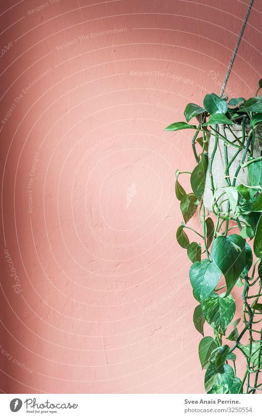 Plant Architecture Wall (building) Wall (barrier) Orange Pink Living or residing Design Flat (apartment) Hip & trendy Hang Ivy Houseplant