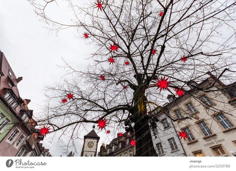 stem holder Christmas & Advent Sky Winter Tree Lime tree Gate Freiburg im Breisgau Downtown Old town House (Residential Structure) Lighting Star (Symbol)