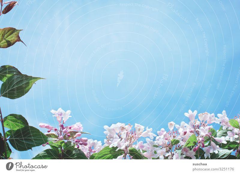 Sky Nature Summer Blue Sun Flower Leaf Life Warmth Blossom Spring Growth Joie de vivre (Vitality) Longing Blue sky Frame