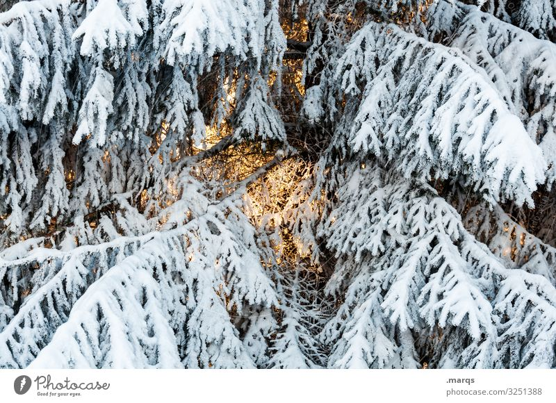 preheating Christmas & Advent Nature Winter Snow Branch Spruce Cold Anticipation Glow Warmth Pensive Colour photo Exterior shot Close-up Deserted Day