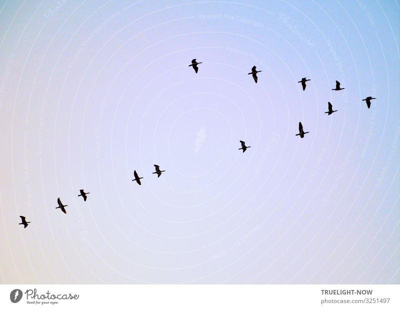 Sky Vacation & Travel Nature Blue Black Autumn Environment Spring Orange Bird Together Flying Dream Air Elegant Wild animal