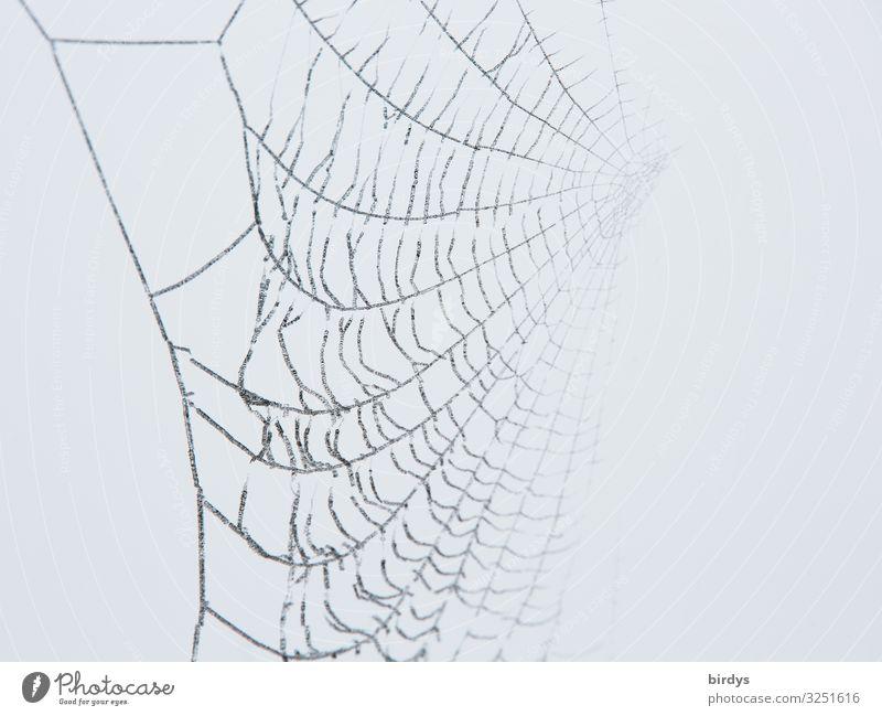 darknet Winter Spider Spider's web Wait Authentic Exceptional Threat Fantastic Astute Gray White Death Esthetic Creativity Nature Network Dream Trap Invisible