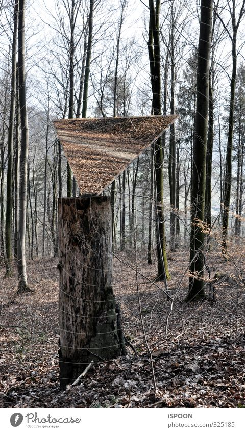 Mirrors in the forest Environment Nature Autumn Tree Leaf Tree stump Moss Forest To hold on Esthetic Sharp-edged Simple Elegant Cold Brown Gray Lanes & trails