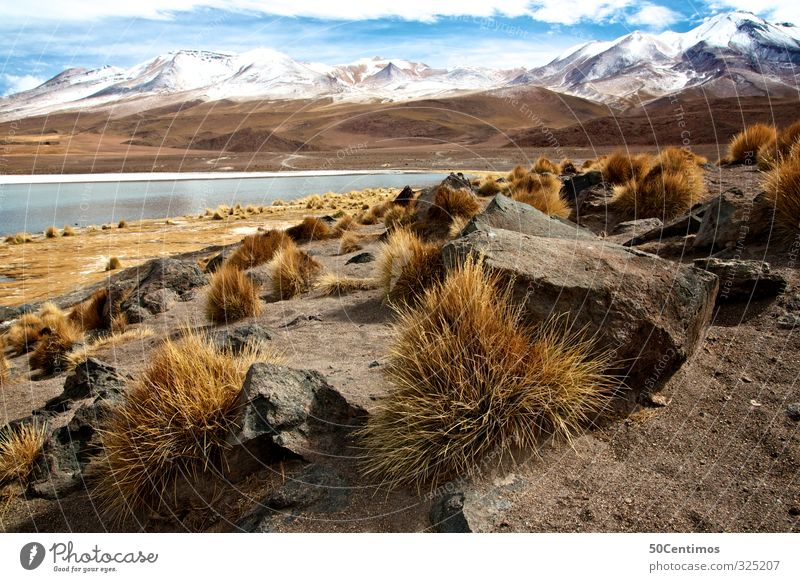 Mountain lake in the Andes in Bolivia with snow and try Plants Nature Landscape Sand Water Clouds Winter Climate Beautiful weather Snow Lake South America Calm