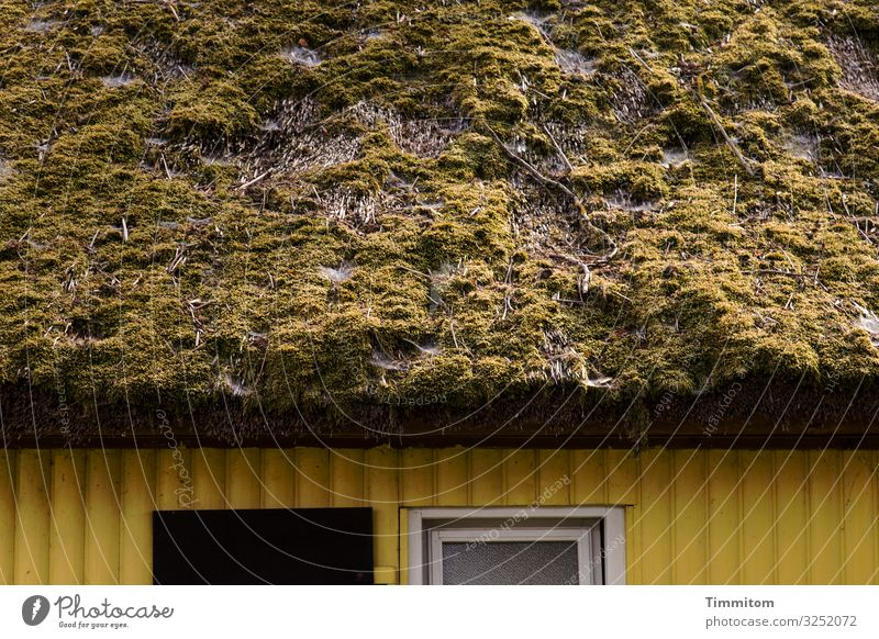 Facade with roof Vacation & Travel Environment Moss Village House (Residential Structure) Wall (barrier) Wall (building) Roof Tourist Attraction Wood Old