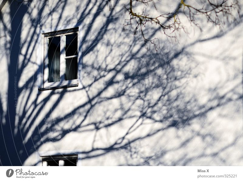 Window II Flat (apartment) Tree Wall (barrier) Wall (building) Black White Treetop Branch Twig Shadow Shadow play Subdued colour Exterior shot Light