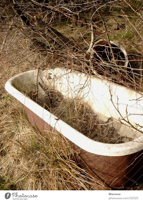 bathtub Bathtub Tree Environment Pasture Trash Obscure Nature Living or residing Old Watering Hole horse drinker