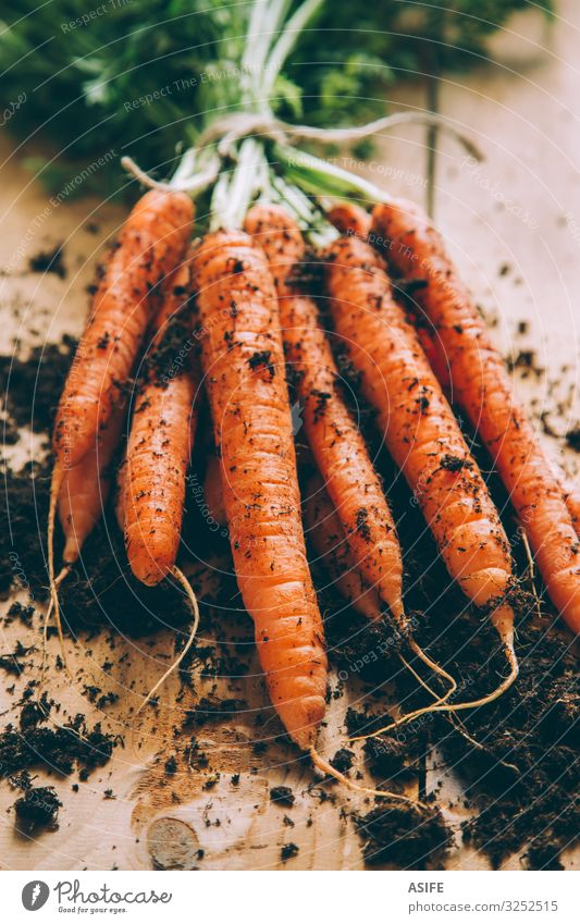 Bunch of carrots Vegetable Vegetarian diet Table Earth Fresh Green bunch Carrot Accumulation Crops Partially visible food healthy orange Raw Root Rustic tied