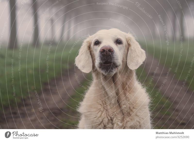 Ho, ho, ho! Animal Winter Weather Fog Field Lanes & trails Pet Dog Golden Retriever 1 Observe Communicate Sit Happy Beautiful Cuddly Natural Cute Gray Green