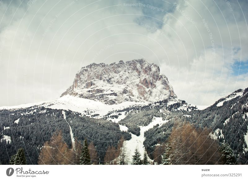 frontal South Tyrol Leisure and hobbies Vacation & Travel Travel photography Mountain Environment Nature Landscape Air Sky Climate Forest Alps Peak Snow