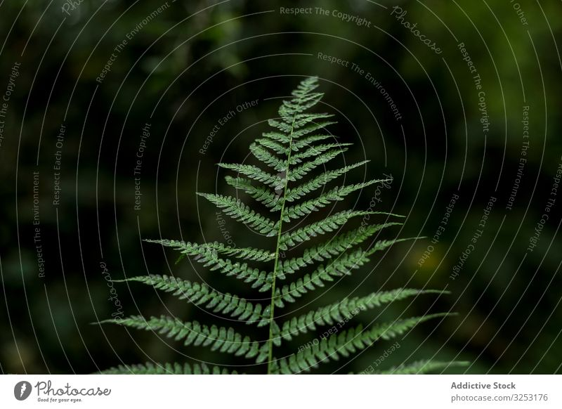 Green leaf in blurred background fern fresh green foliage verdant nature plant forest garden branch twig herb tropical design botany flora organic freshness