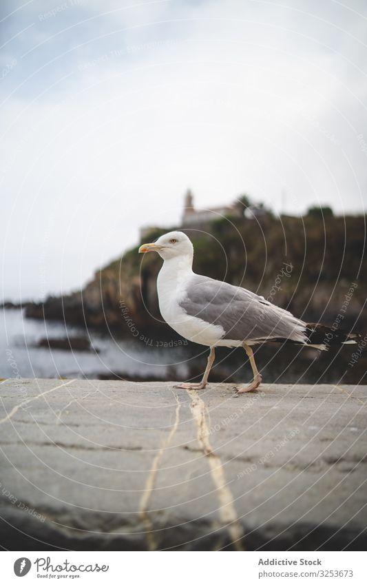 Seagull on stone on hill background seagull nature water coast shore scenic bird animal wildlife edge summer seascape rock landscape walk environment rocky bay