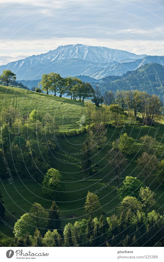 Nature Beautiful Tree Landscape Forest Mountain Meadow Peak Hill Snowcapped peak Austria Mostviertel