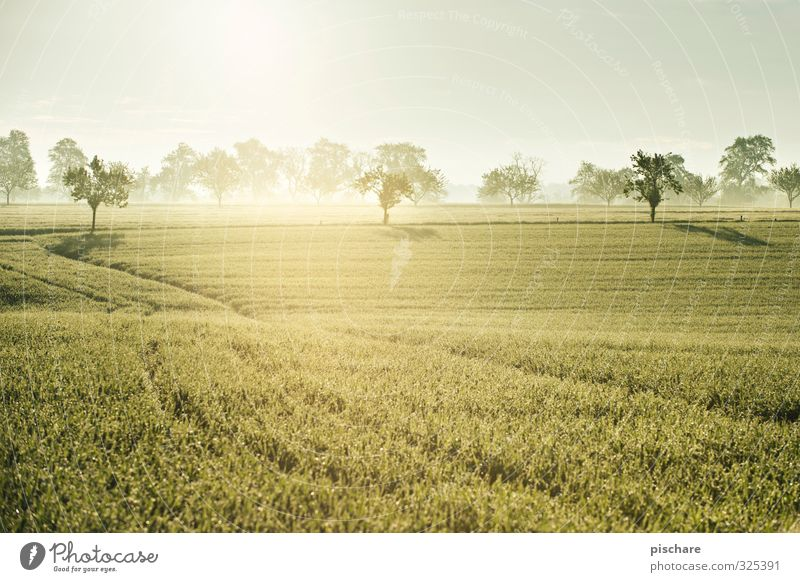 Early in the morning in Austria Landscape Sun Tree Grass Field Beautiful Nature Mostviertel Fog Colour photo Exterior shot Deserted Morning Light Reflection