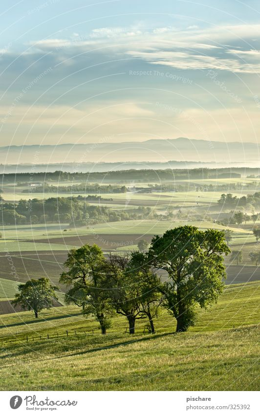 In the country Landscape Fog Tree Meadow Field Natural Green Austria Mostviertel Colour photo Exterior shot Copy Space top Dawn