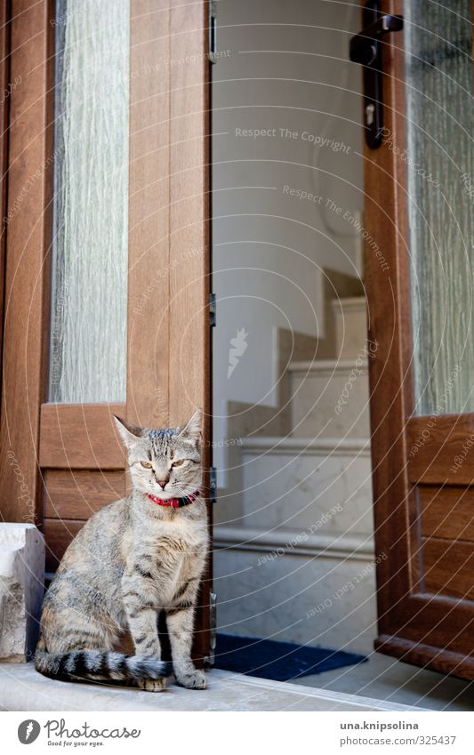 waking cat House (Residential Structure) Stairs Window Door Animal Pet Cat 1 Observe Sit Wait Friendliness Natural Cute Tiger skin pattern Watchfulness