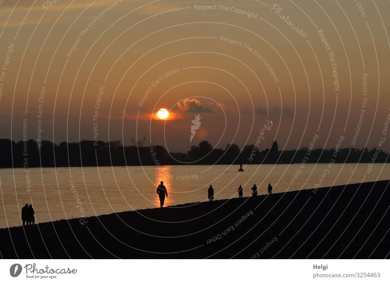 Sunset on the Elbe with silhouettes of people on the banks Human being Environment Nature Landscape Plant Sky Autumn Beautiful weather Tree River bank Elbstrand