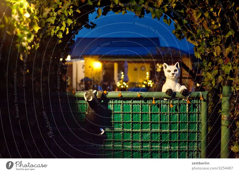 Allotment garden with cats Garden Garden plot Garden allotments Deserted Nature Plant Bushes Copy Space Depth of field Twig Hedge Entrance Door Gate Archway