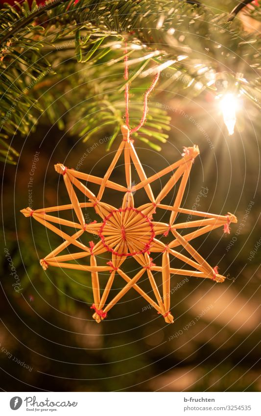 Straw star on Christmas tree Night life Feasts & Celebrations Christmas & Advent Decoration Hang Safety (feeling of) Religion and faith straw star Star (Symbol)