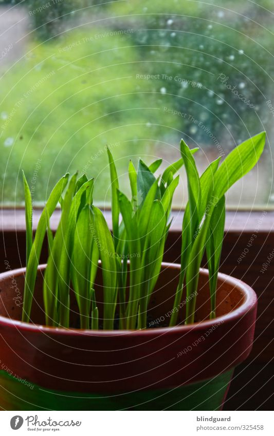 Nature Green Plant Black Spring Wood Car Window Stone Natural Brown Glass Growth Agriculture Delicate Forestry Flowerpot