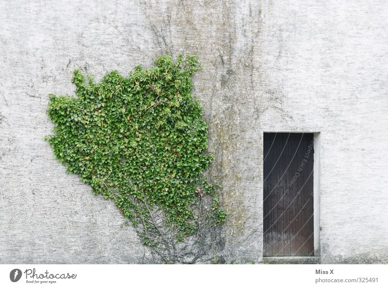 Door I Living or residing Flat (apartment) Plant Bushes House (Residential Structure) Wall (barrier) Wall (building) Facade Old Decline Overgrown Ivy Car door