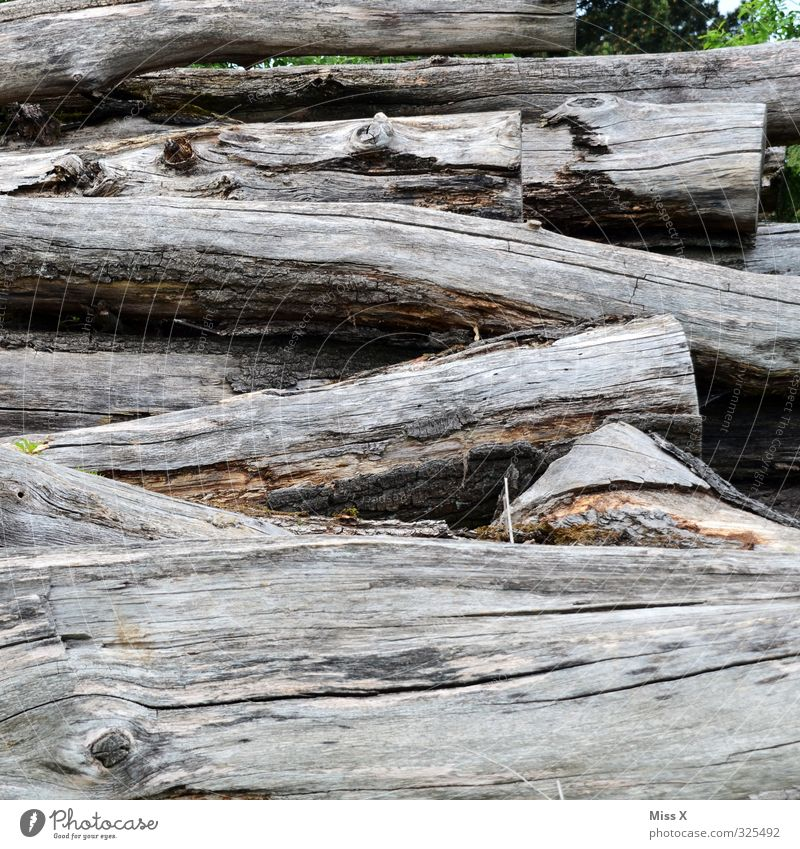 Building material | even more wood Tree Wood Old Firewood Tree trunk Saw mill Subdued colour Exterior shot Deserted Copy Space bottom