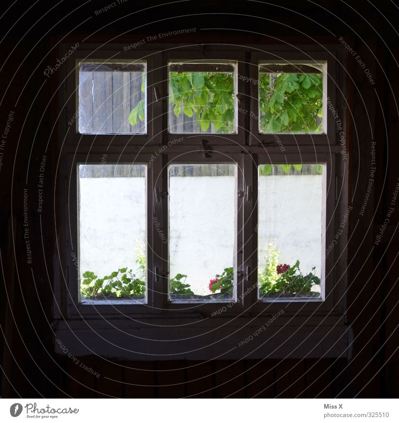 window II Living or residing Flat (apartment) Garden House (Residential Structure) Hut Window Old Dark Cobwebby Penitentiary View from a window Window pane