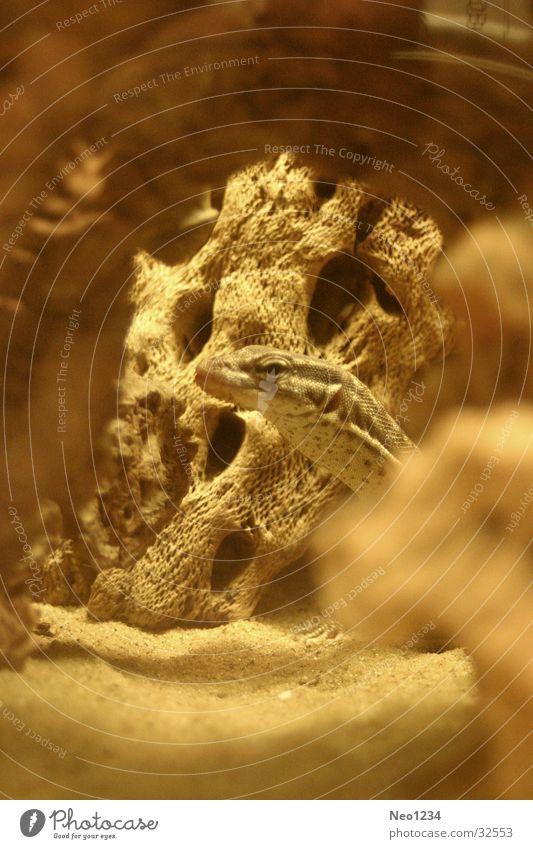 Warmth Physics Beige Saurians Terrarium