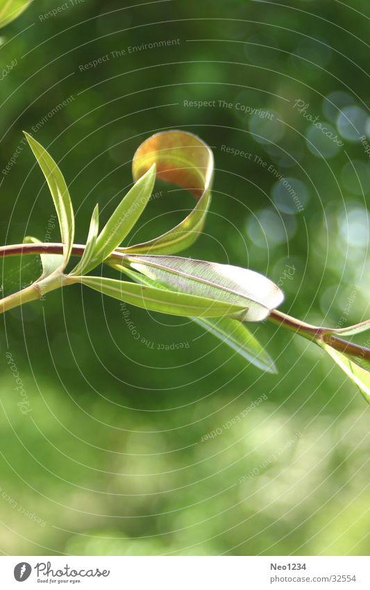 natureleaves Leaf Calm Green Nature Detail Twig